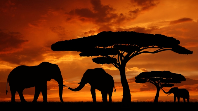 Sunset Elephants.jpg
