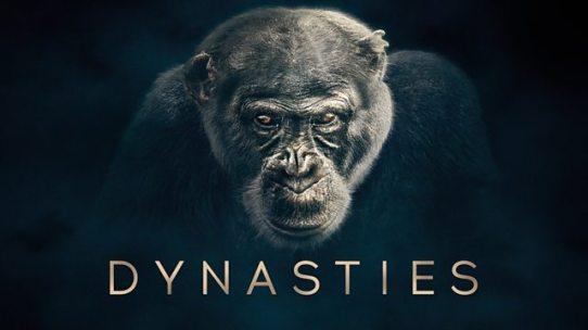 Chimpanzee 4.jpg