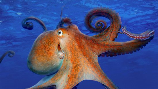 For Smile Day, a common octopus