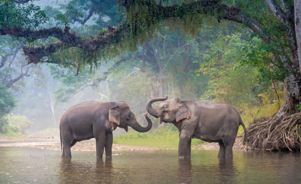 asian-elephant-4.png